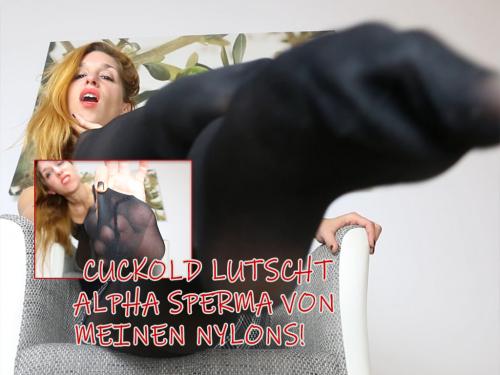 Cuckold lutscht Alpha Sperma von meinen Nylons